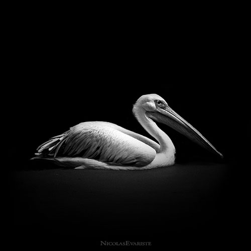 Impressive Animals Photography by Nicolas Evariste