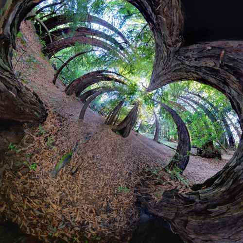 360 Degree World by Randy Scott Slavin