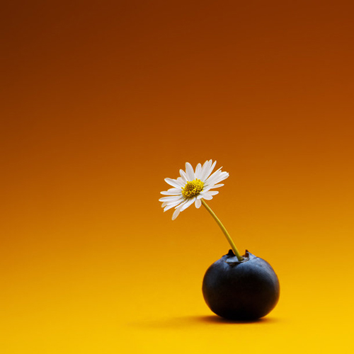 Creative Floral Portraits by James Thornbrook