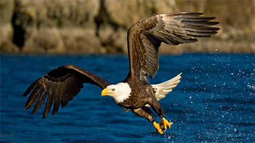 Beautiful Eagle Wallpapers